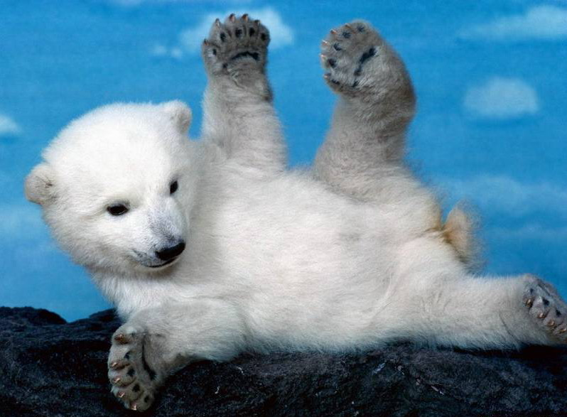 海洋世界动物拼贴画