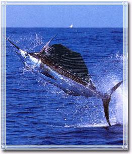 游泳速度最快的鱼